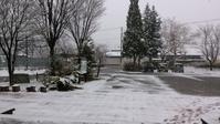 春の雪 - シナモンMILKをご一緒に☆
