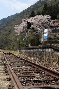 駅桜 - daistarの自己マンライフ