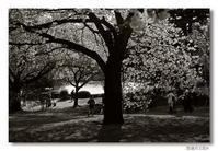 稲植月日記(4)... Leica MM(Typ 246)修行┐(´д`)┌ - M8, M9 & R-D1  for Something I love...323