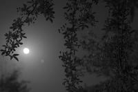 月がキレイだったので - お庭のおと