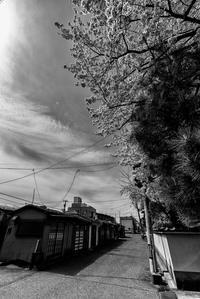 sakura saku - Tom's starry sky & landscape