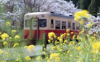 春に囲まれた列車 - またいつか旅に出る