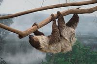 南米の森 - 動物園放浪記