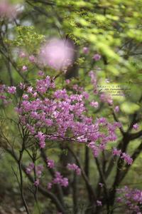 まゝに/4月の散策/都立野山北、六道山公園 - Maruの/ まゝに