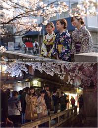 京都の桜 祇園白川らへん - あ お そ ら 写 真 社