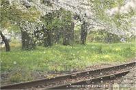 桜と鉄道が絵になる風景 - あ お そ ら 写 真 社