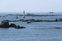 春の海辺 - 木洩れ日 青葉 photo散歩