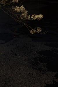 夜桜 3 - 日本写真かるた協会~写真が好きなオッサンのブログ~