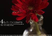 sony α7II + ZEISS Loxia 2/50 でスーパーテーブルフォト中の生徒さま。Photoshop補正前と補正後の作例 - 東京女子フォトレッスンサロン『ラ・フォト自由が丘』-写真とフォントとデザインと現像と-