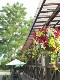 シーズンです!春です! - さにべるスタッフblog     -Sunny Day's Garden-