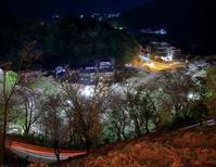 夜桜見物 - 休日はタンデムツーリング