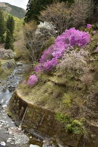 4月5日 Lesson④ 桜を追って2018 - 光画日記