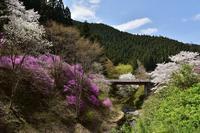 4月5日 Lesson⑤ 桜を追って2018 - 光画日記