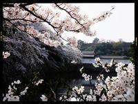 彦根城 - Hare's Photolog