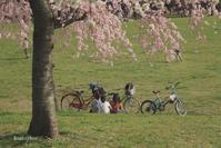 春爛漫 #4 - Bamboobooのひとりごと