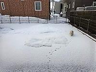 まだまだ雪降りますわ(-_-;) - わんわん・パラダイス