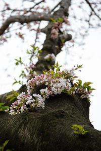 桜の残像 - 彩りの軌跡