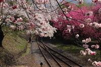 桜だより(16) わ鉄 神戸駅① (撮影日:2018/4/4) - toshiさんのお気楽ブログ