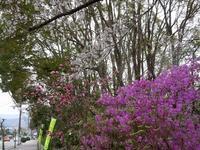 路傍の花、樹々の鳥(204)~3ショット、2ショット~ - 大屋地爵士のJAZZYな生活