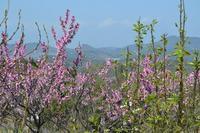 路傍の花、樹々の鳥(205)~サクラのあとは・・・~ - 大屋地爵士のJAZZYな生活