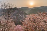 春爛漫 - toshi の ならはまほろば