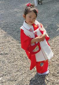 春の七五三・3才お嬢様の可愛い晴れ着姿 - それいゆのおしゃれ着物レンタル