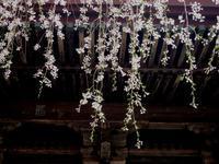 春爛漫の三春で桜巡り -  Der Liebling ~蚤の市フリークの雑貨手帖2冊目~