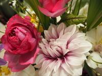 花選びのコツ - グリママの花日記