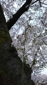 春ですね - きなこたんのblog
