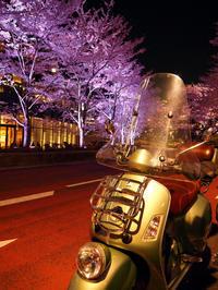 仕事帰りに夜桜見物 - やよいの空