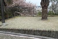 ピンクのじゅうたんと、タコノキの実 - 手柄山温室植物園ブログ 『山の上から花だより』
