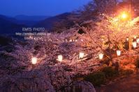 尾道の桜 - 気持ちFHOTO