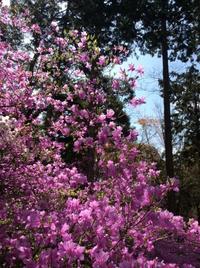 春の石山詣で  石山寺(滋賀)  2018.4 - Hawaiian LomiLomi サロン  華(レフア)邸