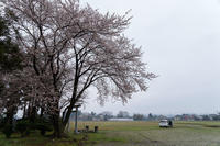 Sakurainspection - Tom's starry sky & landscape