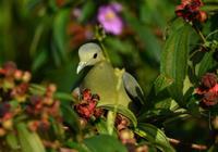 singapore 初日no.4 - 可愛い野鳥たち 2