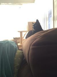 ネコ: 日が延びたからの - にゃんこと暮らす・アメリカ・アパート(その2)