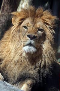 「ネコたちの谷」の大きなネコたち - 動物園放浪記