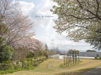 春のクレマチスの丘へ - Photographie de la couleur