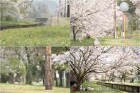 桜と鉄道が絵になる風景#2 - あ お そ ら 写 真 社