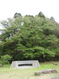 新緑の季節到来 - 千葉県いすみ環境と文化のさとセンター