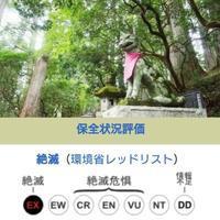 パワーアニマル/ニホンオオカミ - 菫青石に天の川