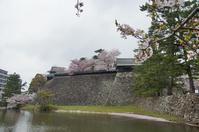 桜の松江城 - 清治の花便り