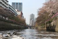 東京...桜スポットを巡る - 毎日がばら色