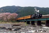 大井川鐡道で汽車ぽっぽと桜を楽しむ - 四季彩の部屋Ⅱ