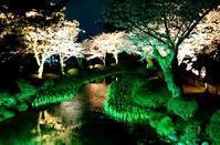 兼六園&犀川峡の夜桜 - 金沢犀川温泉 川端の湯宿「滝亭」BLOG