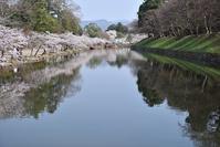 彦根城桜その3 - 尾張名所図会を巡る
