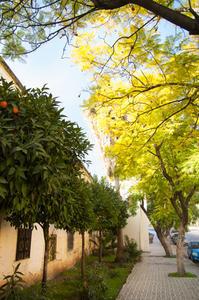 フェズの街の光景〜植栽を中心に〜 - ぐりーんらいふ