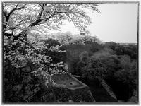 彦根城-2 - Hare's Photolog