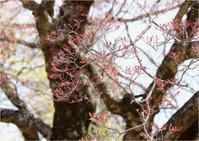☆満開の桜にチョウ☆ - 気ままなフォトライフ