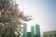 桜とガスタンク - アワジシマイッシュウ(某島民)